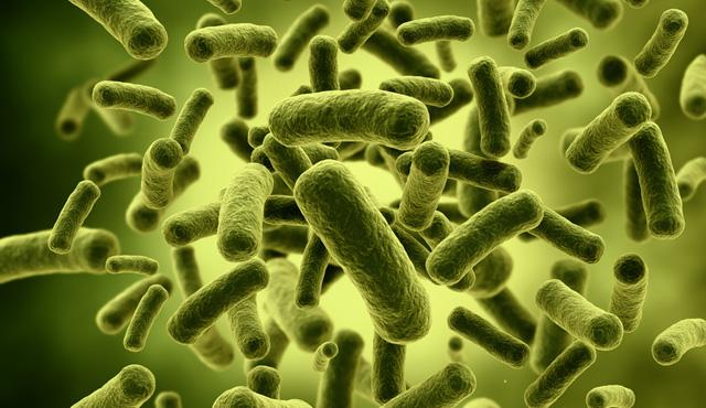 Blog-Microbiota